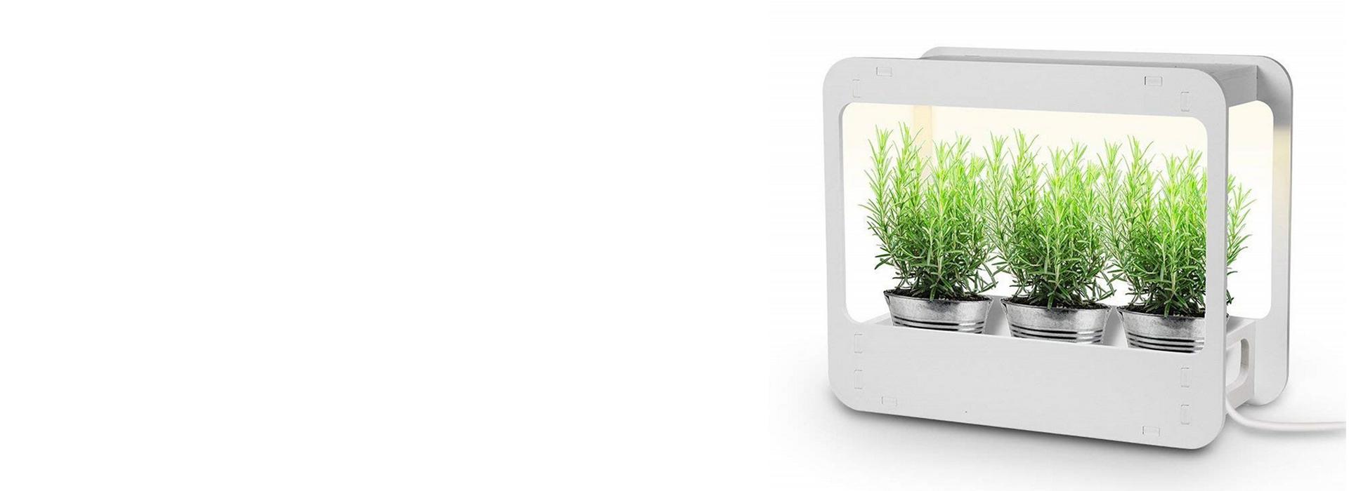 LED Mini Garden